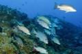 NOAA Triples Gulf of Mexico Marine Sanctuary Area