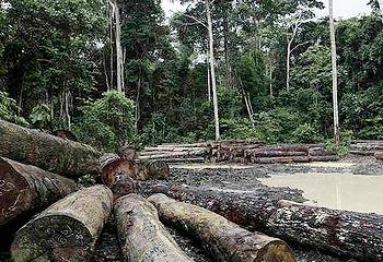 logging Brazil