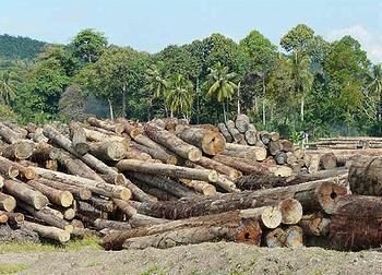 logs in Sabah