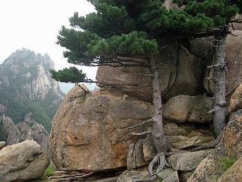 Korea park