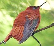 endangered bird