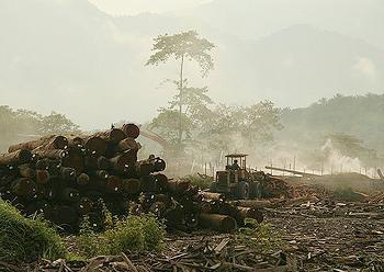 logging Malaysia