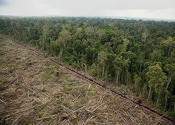 Indonesia logging