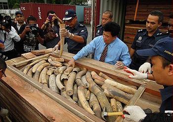 ivory, tusks, Malaysia