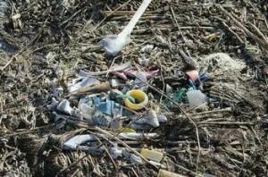 albatross carcass