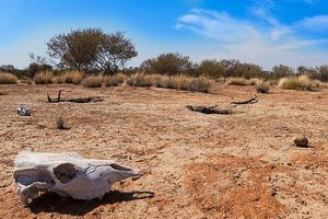 Drought in central Australia, October 2012
