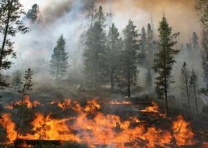 Idaho Wildfire