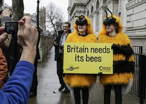 bee demonstrators