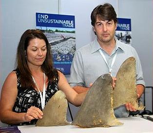 shark NGO