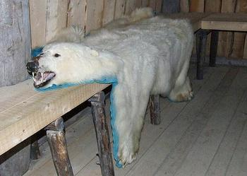 polar bear pelt