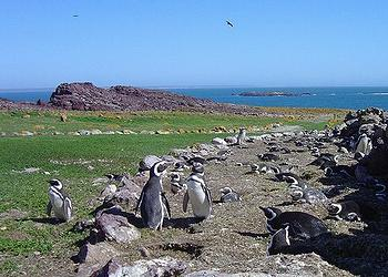 Isle of Penguins