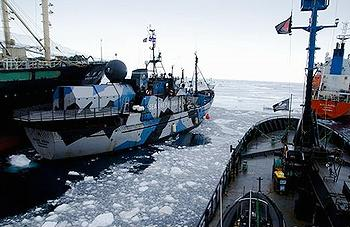 Ramming in the Southern Ocean, from left: Japan's factory ship Nisshin Maru, the Bob Barker, the Steve Irwin, refueling tanker Sun Laurel (Frame grab from Sea Shepherd video courtesy Sea Shepherd Australia)