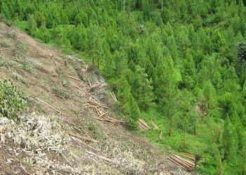 logging Peru