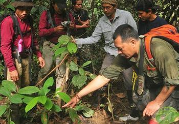 WWF-Indonesia