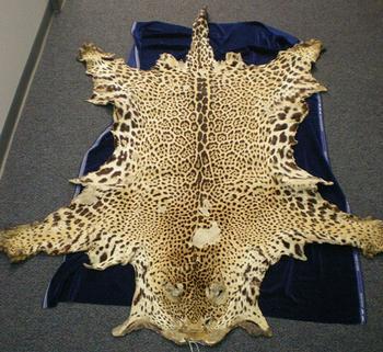 jaguar skin