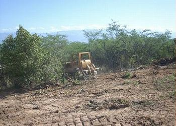 Bulldozer clears the Biological Reserve, July 17, 2013 (Photo courtesy Grupo