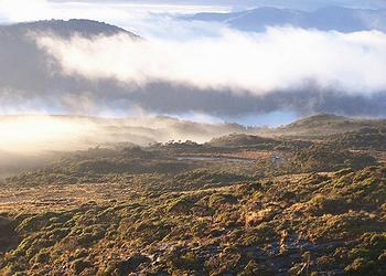 Denniston Plateau