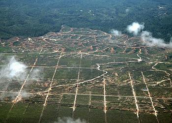 oil palm expansion