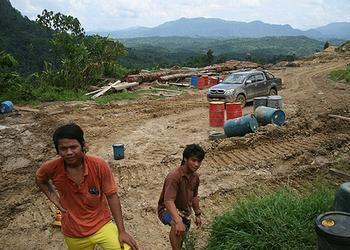 clearing Sarawak