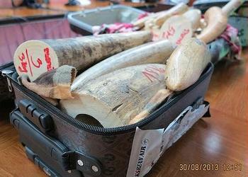 ivory seizure
