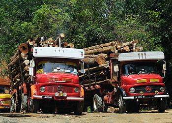 illegal logging