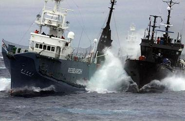 Confrontation between Japanese whaling vessel, left, and Sea Shepherd whale defense vessel in the Southern Ocean (Photo courtesy Sea Shepherd)