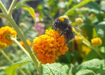 Neonicotinoid Pesticides Harm Bees' Foodgathering Ability | ENS