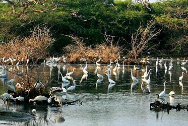 wetland, birds
