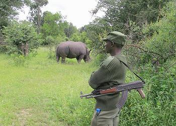 guard, rhino