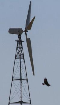 eagle and turbine