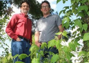 John Jelesko, left, and Matt Kasson in the Virginia Tech College of Agriculture and Life Sciences have discovered a way to kill poison ivy naturally. (Photo courtesy Virginia Tech)