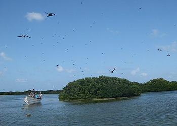 Codrington Lagoon
