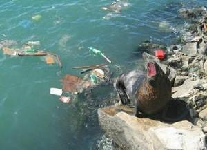 seal, plastics