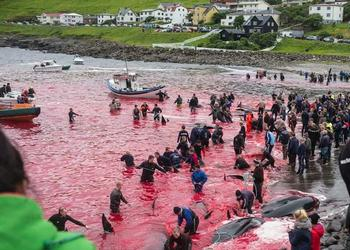 whale killing