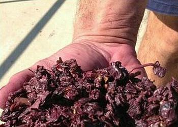 grape marc