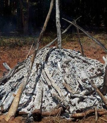 ivory ashes