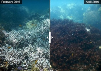 Northern Great Barrier Reef Loses 35 Of Its Corals Ens