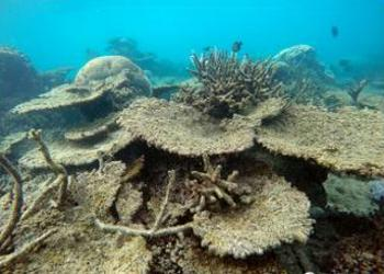 corals dead