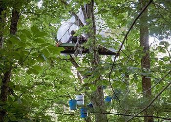 tree sitters