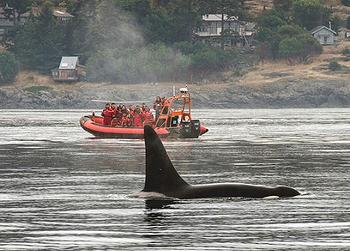 orca boat