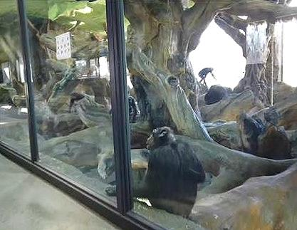 chimp enclosure
