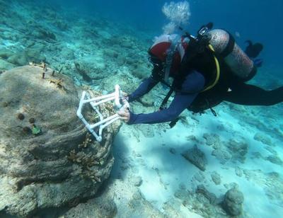 monitoring coral